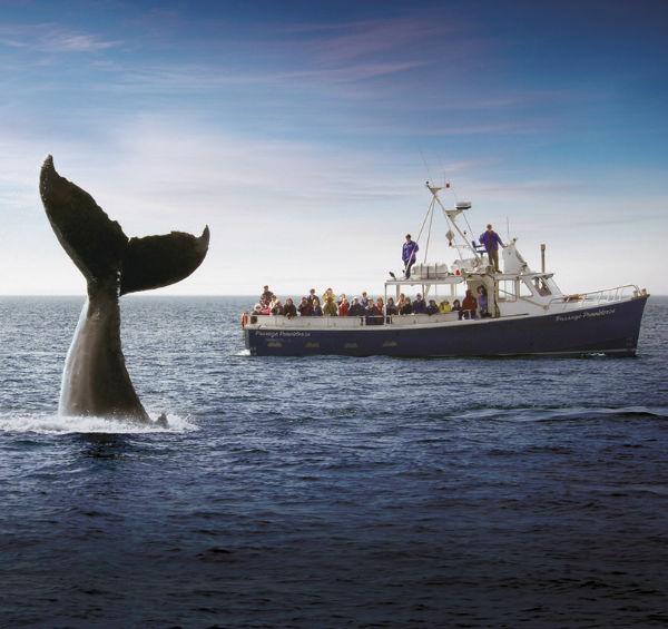 Whale Watching Trips in Nova Scotia