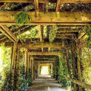 The Nitobe Memorial Garden in Vancouver, British Columbia